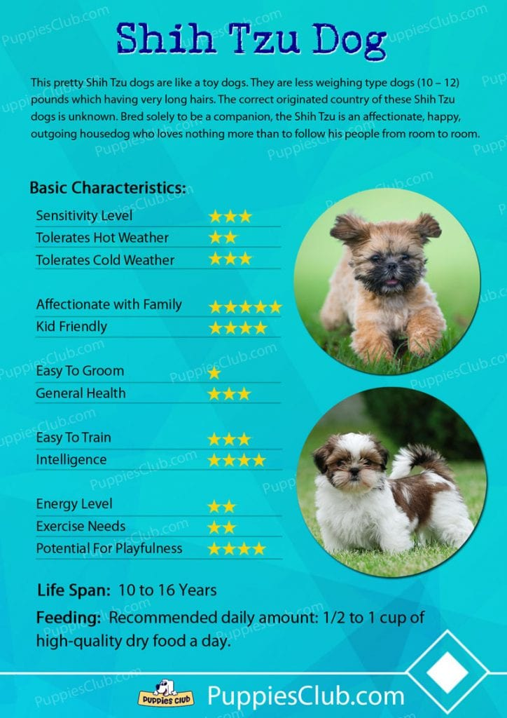 shih tzu dog breed characteristics