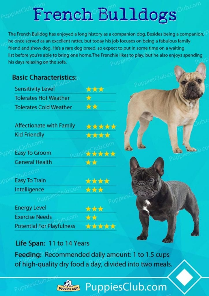 french bulldog breed characteristics