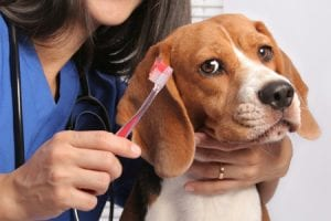 dog dental disease