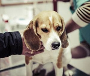 kidney disease in dogs