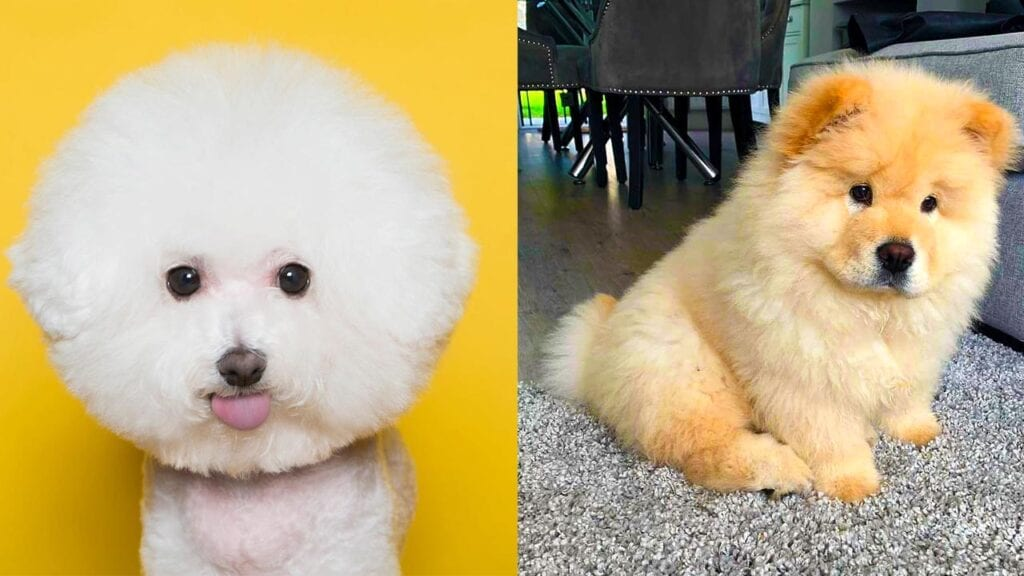 The 12 Fluffiest Dogs Ever!