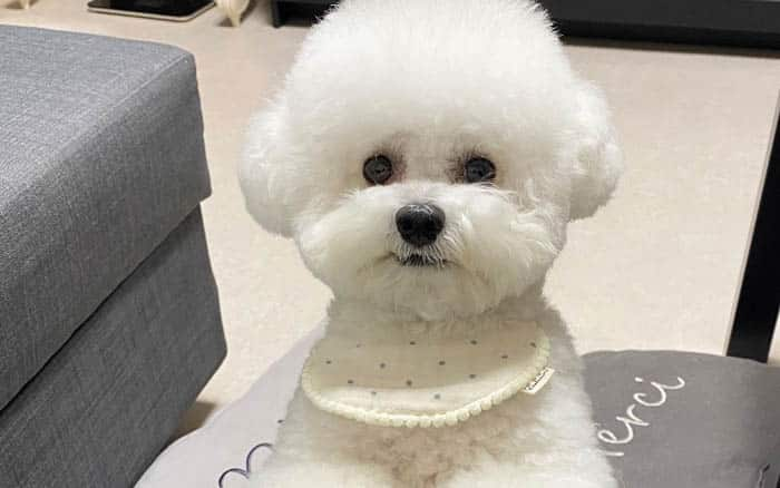 The 12 Fluffiest Dogs Ever! 1